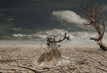 干渴的鹿图片