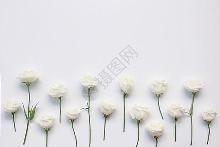 白色桔梗七夕背景素材图片