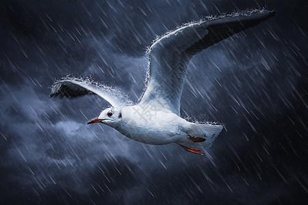 暴雨中展翅翱翔的海燕图片