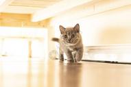 静静的小猫图片
