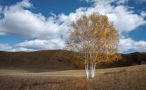 一棵树图片