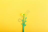 一朵小花图片