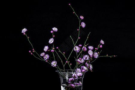 盛开的梅花插花素材图片