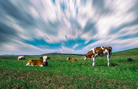 风云草原上牛儿吃草图片