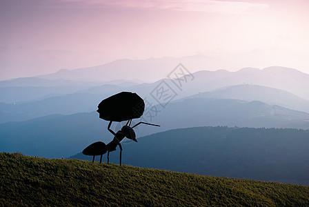 坚强的蚂蚁图片