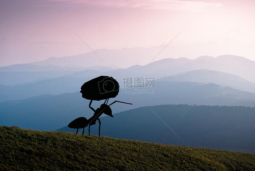 唯美图片 自然风景 坚强的蚂蚁jpg