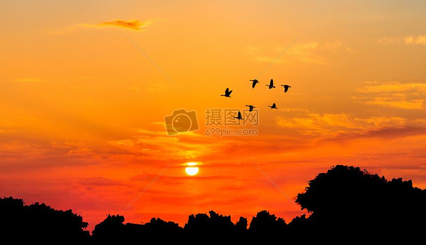 落日飞鸟摄影图片免费下载_自然/风景图库大全_编号