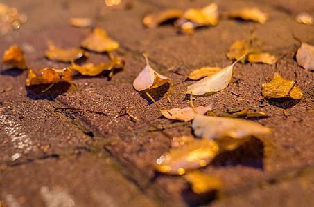 被夏季太阳雨浇灌的万物图片