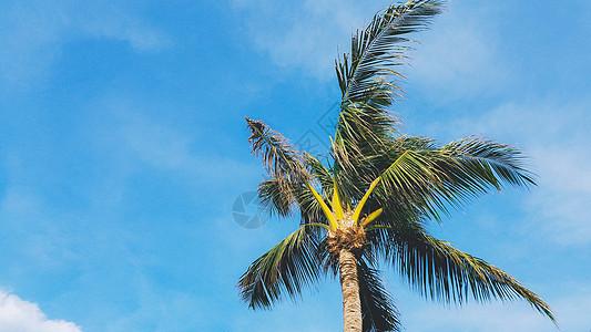 蓝天白云椰树图片