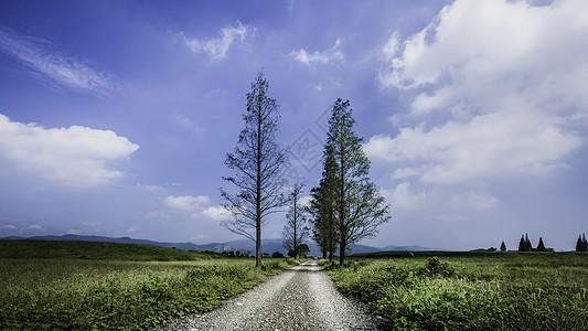 蓝天下的石路与杉树图片