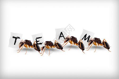 蚂蚁团队创意图片图片