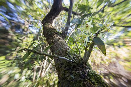 林下种植铁皮石斛图片