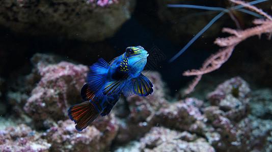 漂亮的海水鱼在鱼缸图片