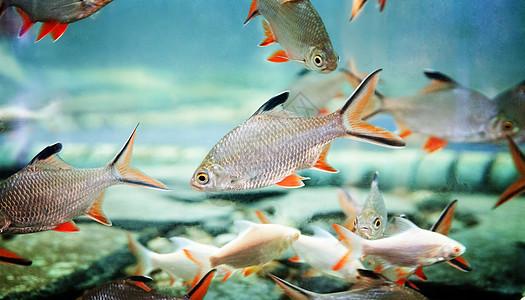 鱼淡水鱼缸图片