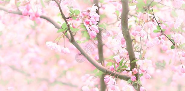 公园里的粉红色的回忆图片