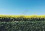 黄绿蓝春天郊野的色彩油菜花田图片