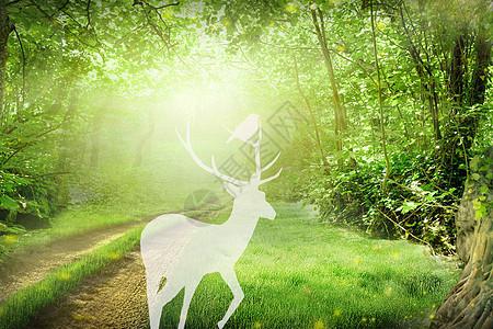 森林里的梅花鹿图片