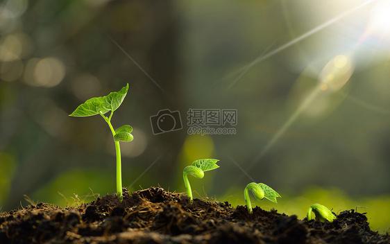 发芽的植物图片