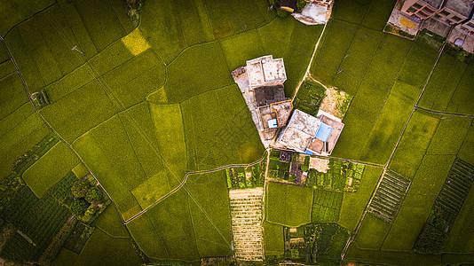 俯拍农田图片