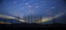 落霞中的树木图片