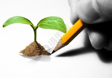 铅笔画出的嫩芽图片