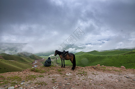 新疆牧羊人与马图片