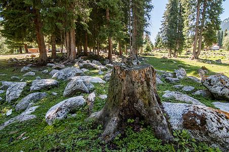 新疆森林树木石头乱石图片