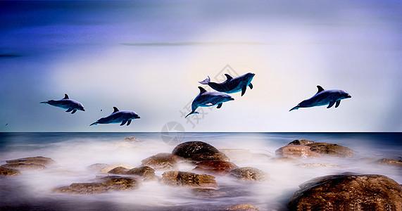 海豚飞跃图片