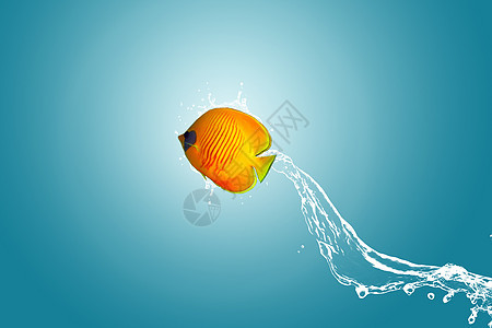 跃出水面的鱼图片
