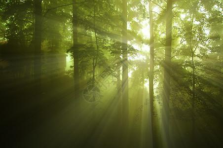 迷雾森林图片