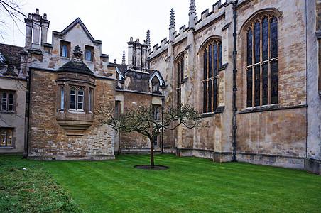 英国剑桥大学牛顿的苹果树图片