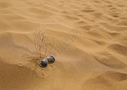 酷热沙漠墨镜图片