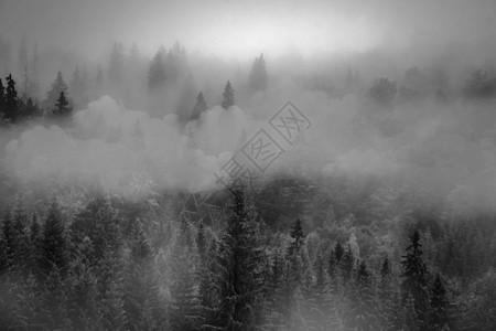 梦幻远古森林迷雾松林图片