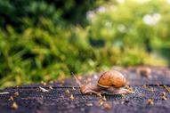 爬行的蜗牛图片