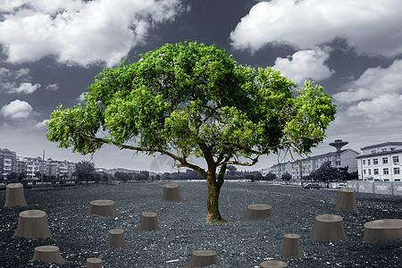 树桩与大树图片