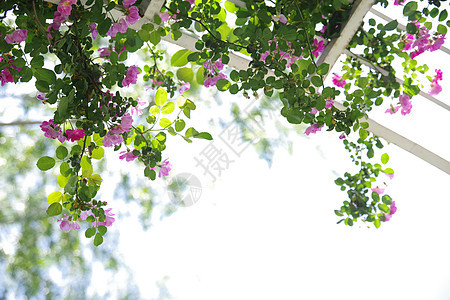 花园里的盛夏图片