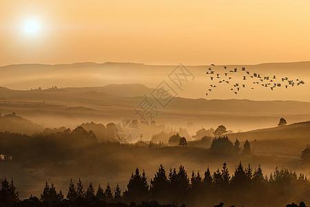 日落飞鸟图片