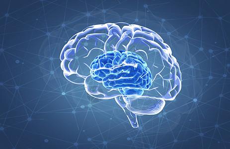大脑孕育创新思维图片