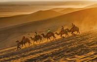 沙漠中行进的骆驼队伍图片