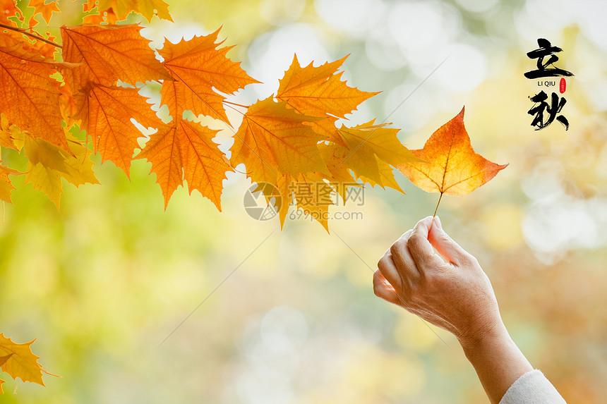 秋之立秋图片