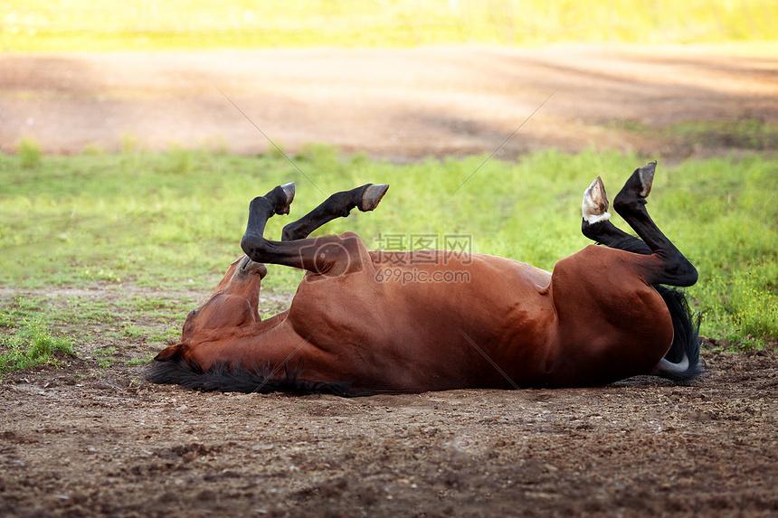 草地上打滚的马图片