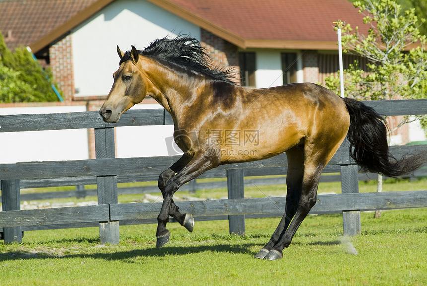 奔跑的骏马图片