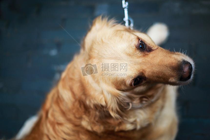 狗狗是人类的朋友图片