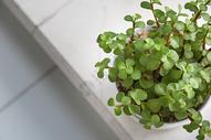 多肉植物小清新场景图片
