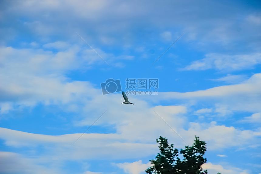 田野间的白鹭图片