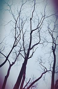 枯木留影图片