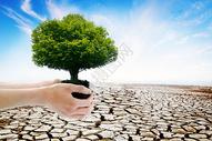 保护森林生态学的概念图片