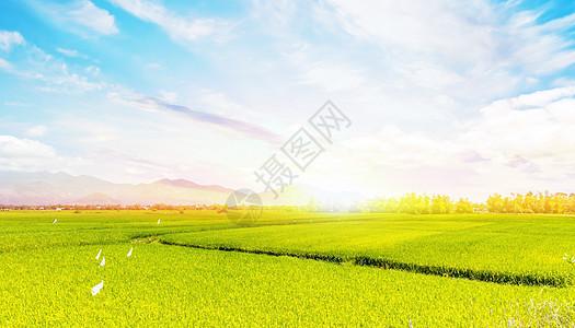 美丽的稻田景色图片