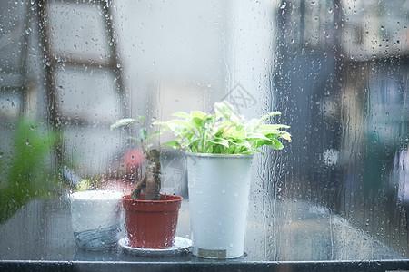 雨景里的绿植静物图片
