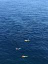 海上赛艇图片